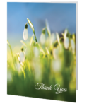 thank-you-card-snowdrop